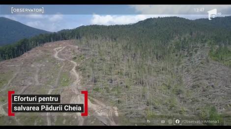 Eforturi pentru salvarea Pădurii de la Cheia
