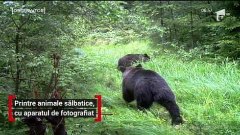 În Parcul Grădiştea Muncelului, din Hunedoara, animalele sălbatice stau ca la paradă şi strălucesc în faţa aparatelor de fotografiat