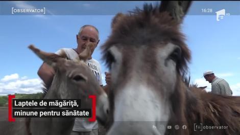 Afacerea cu lapte de măgăriţă, un real succes pentru câţiva gospodari din Hunedoara