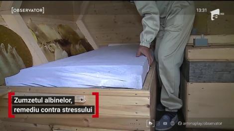 Un apicultor din Mureș a pus pe picioare o afacere vindecătoare cu albine