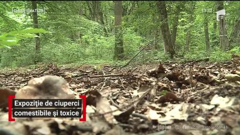 Expoziție de ciuperci la Târgu Mureș. Au fost expuși hribi comestibili și toxici, pentru deosebire