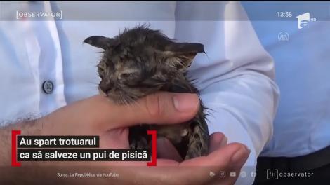 Un pui de pisică, blocat într-un canal, a fost salvat de echipajele de intervenție din Turcia