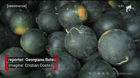 Pepenii din Bihor amenință supremația celor de Dăbuleni