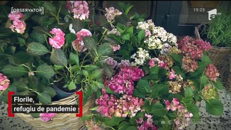 Florile, refugiu de pandemie