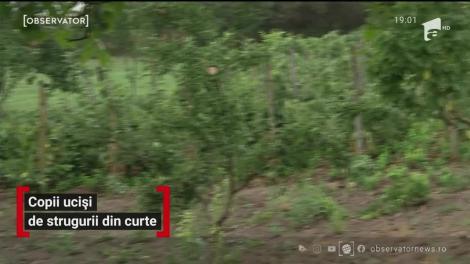 Doi copii din Iași au fost uciși de strugurii din curte