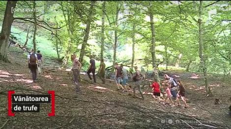 În localitatea Achita din judeţul Mureş, a început vânătoarea de trufe