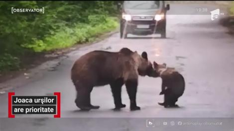 Joaca urșilor are prioritate