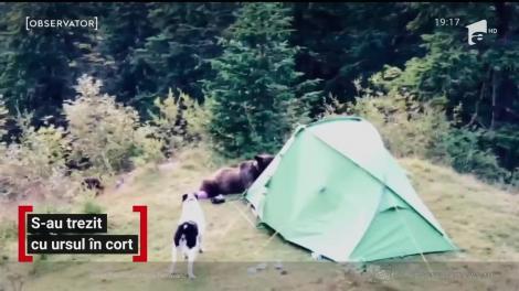 Câţiva turişti care campau în munţii Bucegi au avut parte de aventura vieţii lor. O ursoaică a dat buzna în cortul lor