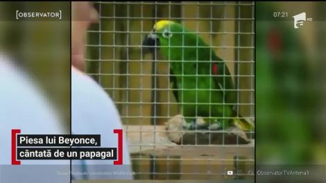 Piesa lui Beyonce, cântată de un papagal
