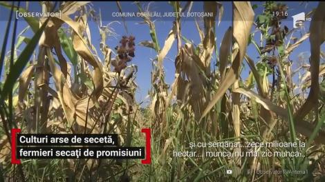 Culturi arse de secetă, fermieri secați de promisiuni