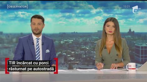TIR încarcat cu porci răsturnat pe Autostrada Bucureşti-Piteşti