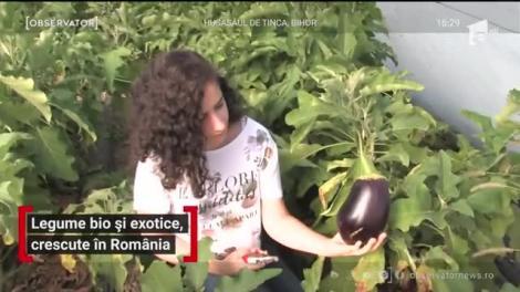 Legume bio și exotice, crescute în România