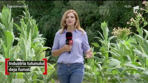 Ultimii cultivatori de tutun din România