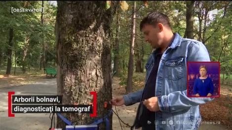 Arborii bolnavi, diagnosticați la tomograf
