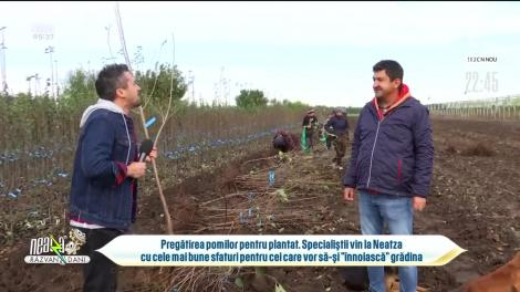 """Pregătirea pomilor pentru plantat. Specialiștii vin cu cele mai bune sfaturi pentru cei care vor să-și """"înnoiască"""" grădina"""