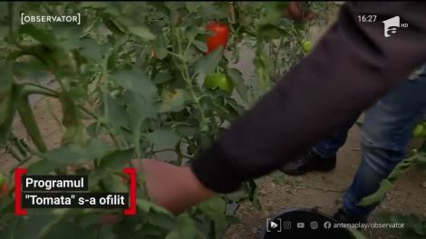 """Programul """"Tomata"""" s-a ofilit. Roșiile românești dispar de pe tarabe"""