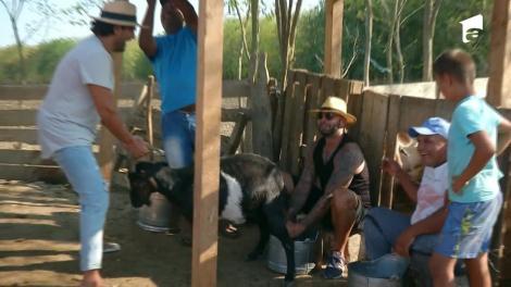 Giani Kiriță a încurcat țapul cu capra! Iată cum au muls capre și cărat bălegar vedetele de la Poftiți la circ