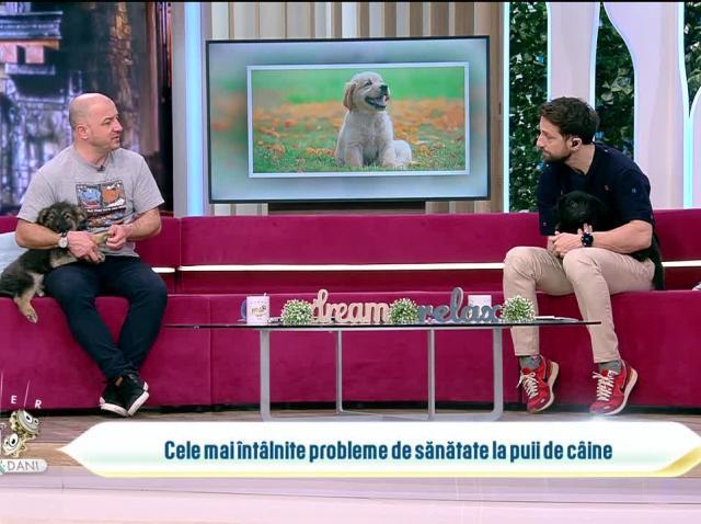 Totul despre cele mai întâlnite probleme de sănătate la puii de câine
