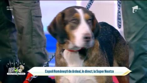 Copioii Românești de Ardeal, în direct, la Super Neatza