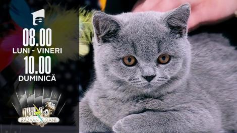 De ce trebuie să ţinem cont când adoptăm o pisică