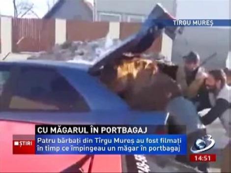 4 bărbaţi au îndesat la propriu, un măgar în portbagaj