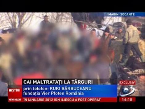 Imagini șocante! Zeci de cai sunt maltratați la târgurile din Neamț