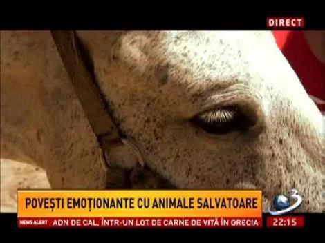 Sinteza Zilei: Poveşti emoţionante cu animale salvatoare