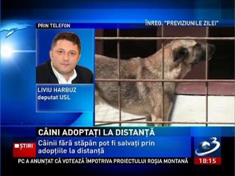Câinii fără stăpân pot fi salvaţi prin adopţiile la distanţă
