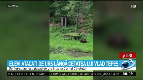 """Elevi atacaţi de ursoaică, lângă cetatea lui Vlad Ţepeş! """"Acum câteva minute a fugărit niște copii"""" - Video"""