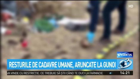 VIDEO. Resturi de cadavre umane, aruncate la gunoi. Descoperire macabră pe un câmp de lângă Timişoara