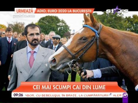 Un cal poate să coste mai mult decât o maşină de lux! Topul celor mai scumpi cai din lume