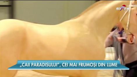 Cel mai frumos cal din lume! Coama lui strălucește ca vopseaua metalizată. Este perfect!