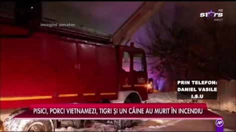 Un garaj plin cu animale a luat foc la Circul Globus