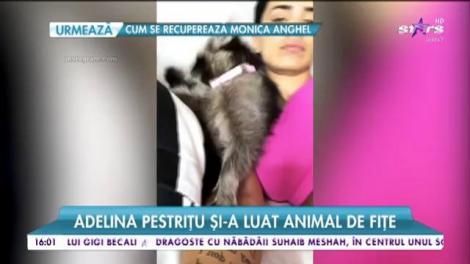 Adelina Pestriţu și-a luat animal de fițe