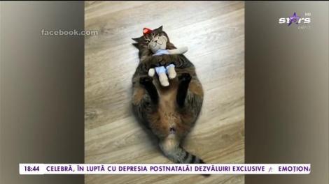 Prietenie inedită între o pisică și un ursuleț de pluș