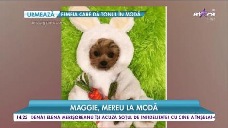 Maggie. mereu la modă. Cea mai drăgălașă cățelușă face furori pe internet