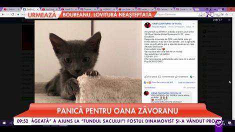 Panică pentru Oana Zăvoranu. Vedeta și-a pierdut pisica