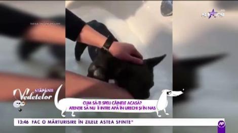 Cum să-ți speli câinele acasă. Atenție să nu îi intre apă în urechi și nas