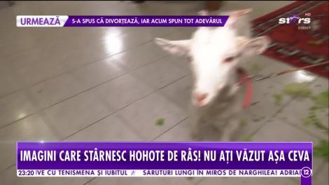 Agenția Vip. Mariana Calfa, show cu capre, găini și rațe. Câte animale are în casă vedeta